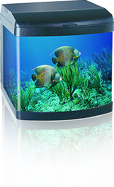 Antibacterial Glass Aquarium